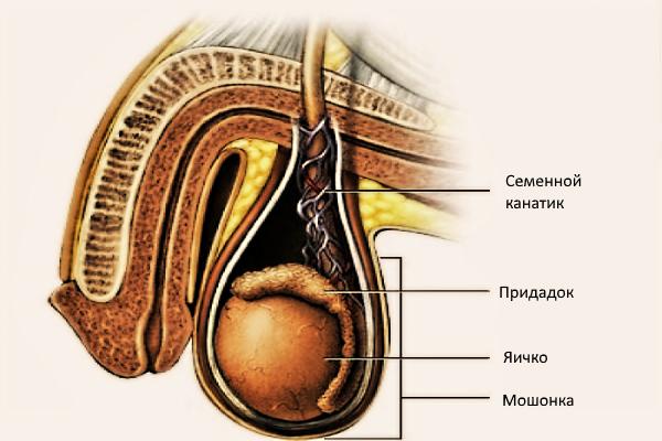glotanie-muzhchinoy-svoey-spermi
