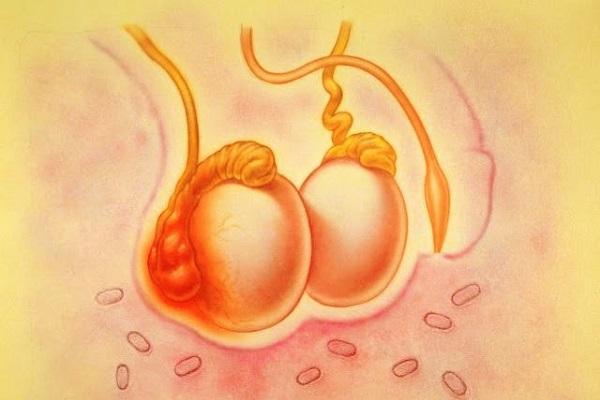 аугментин при воспаление яичка