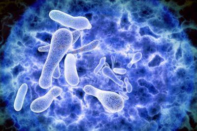 развития пневмонии вследствие атаки дыхательных органов бактерией Legionella
