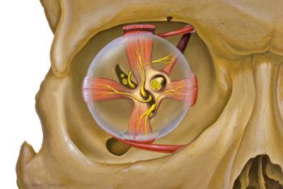 симптомами поражения оптического нерва являются снижение остроты зрения и цветовосприятия