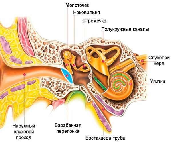 Ехстахиева труба