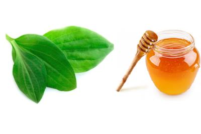 подорожник с медом - эффективное средство от кашля