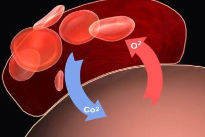 ухудшение поступления кислорода приводит к скоплению в крови продуктов распада