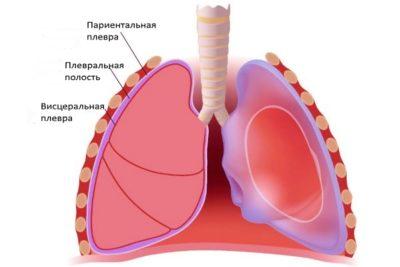 между грудной клеткой и легкими находится узкое пространство, выстланное тонкой серозной оболочкой – плеврой