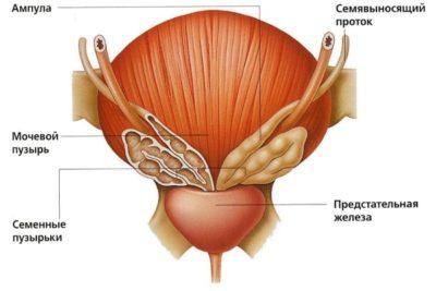 воспаление мочевого пузыря у мужчин часто обусловлено уже имеющимися патологиями