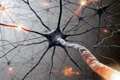 сложность строения головного мозга человека способна повергнуть в панику и уныние даже специалиста