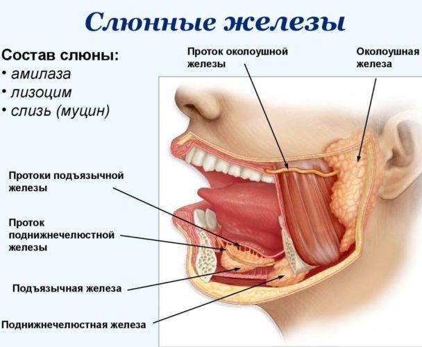Причины и симптоматика воспаления слюнных желез